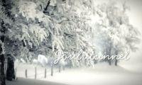 Tänavune «Jõulutunnel» on pühendatud liikumispuudega inimestele